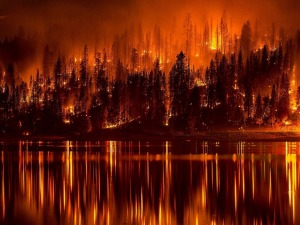That's a metaphorical forest fire.  It's really your hormones  that are trying to kill you . . .